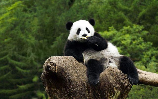 20120425-02-Allati-pihen-a-panda
