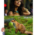 Mit fox választani? :)