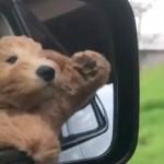 A cuki kutyának lételeme a száguldás - videó